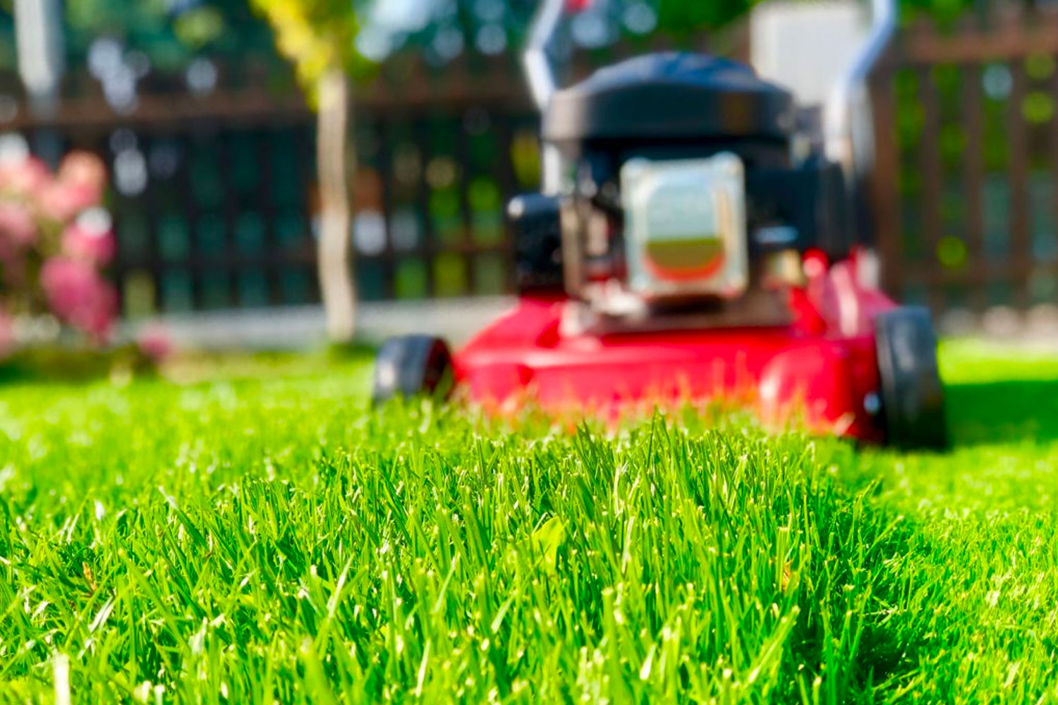 Lawn Mowing and Maintenance Gold Coast